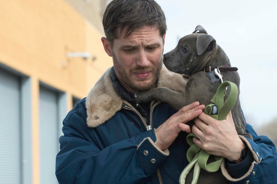 the-drop-tom-hardy-dog-900x598